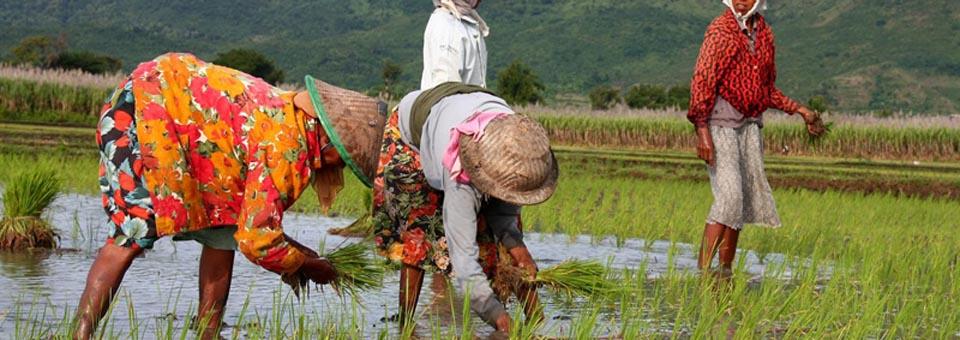 Sragen Siapkan 3 Desa Wisata Organik