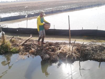 Manfaatkan Aliran Air  Sungai, Petani Ruwit Mulai Tebar Benih
