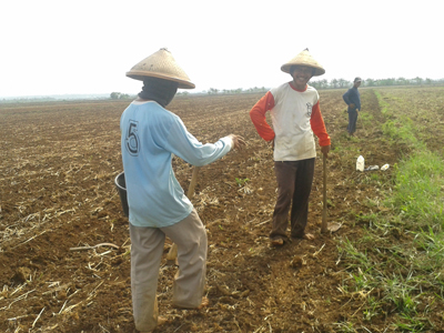Petani Desa Sowan Kidul Harapkan Irigasi dan Jalan Pertanian
