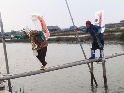 Inilah Wanita Perkasa Dari Pesisir , Tenaga Angkut di Lahan Garam