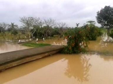 Puluhan Hektar Sawah Terendam Banjir , Padi Baru Ditanam Terancam Mati