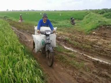 Jalan Pertanian Buruk Petani Kesulitan Angkut Hasil Panen