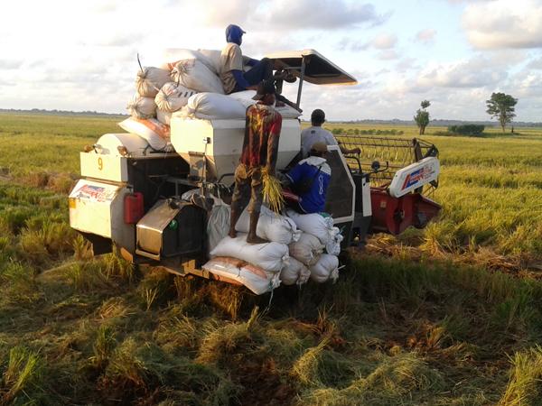 Petani Tedunan Jepara Datangkan  Mesin Pemanen Padi