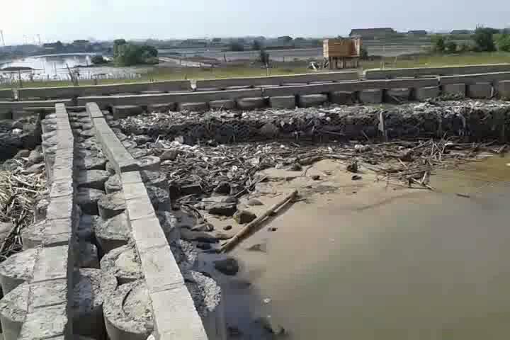 Sabuk Pantai Desa Bulak Baru Jepara Butuh Dana Pemeliharaan