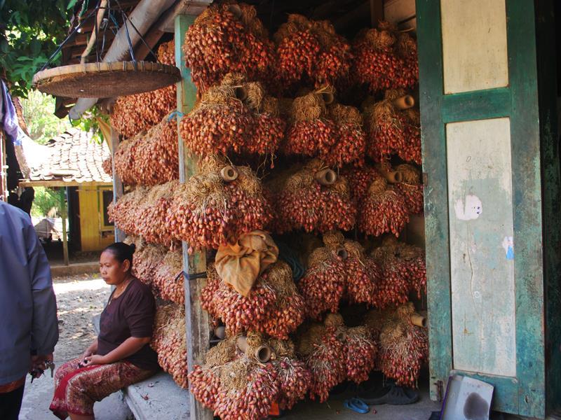 Bawang Merah dari Desa Pasir Demak Sudah Dikenal Sejak Dulu