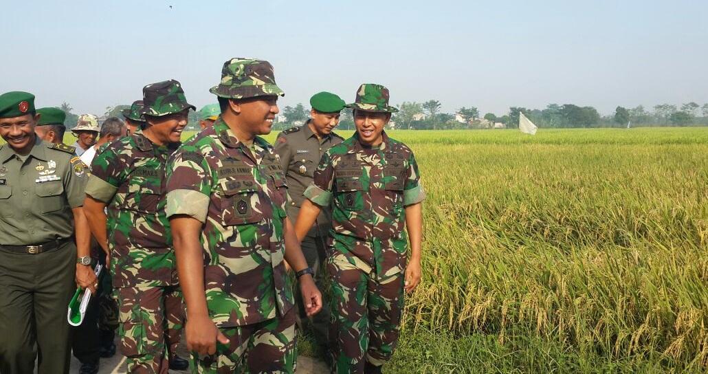 Sukseskan Swasembada  Pangan, Pangdam Jaya Sidak Cluster Pertanian