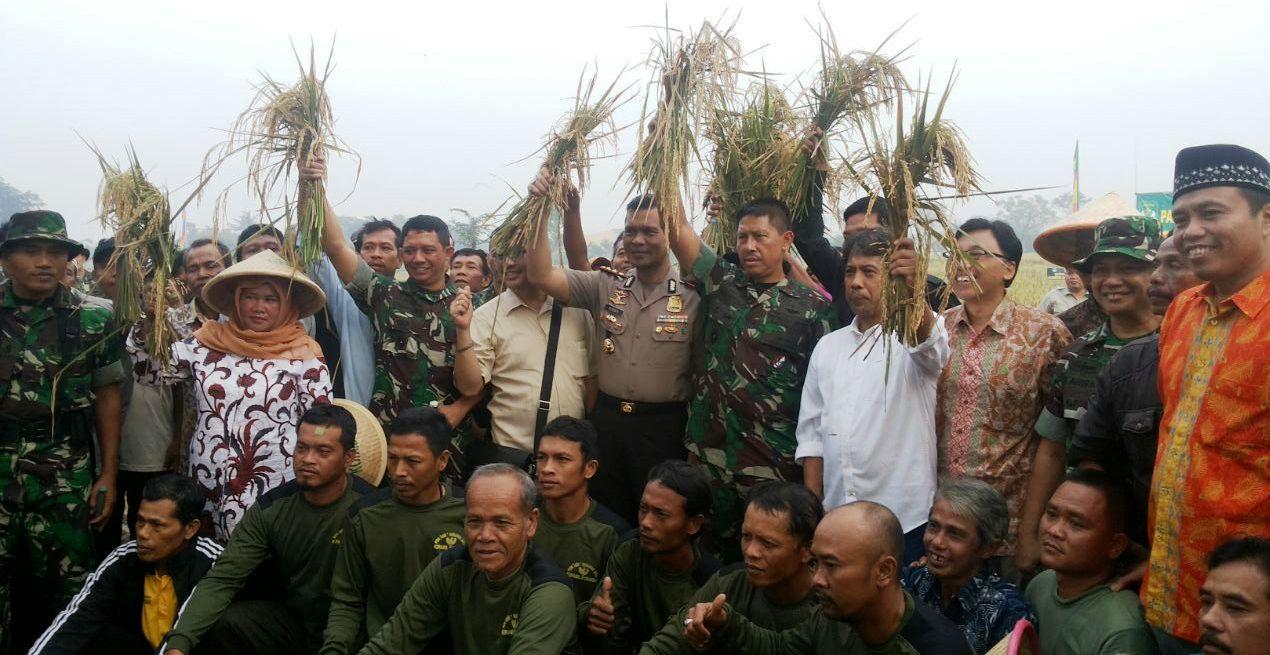 Pangdam Jaya/Jayakarta Panen Raya Padi di Cibitung, Hasil Berlimpah
