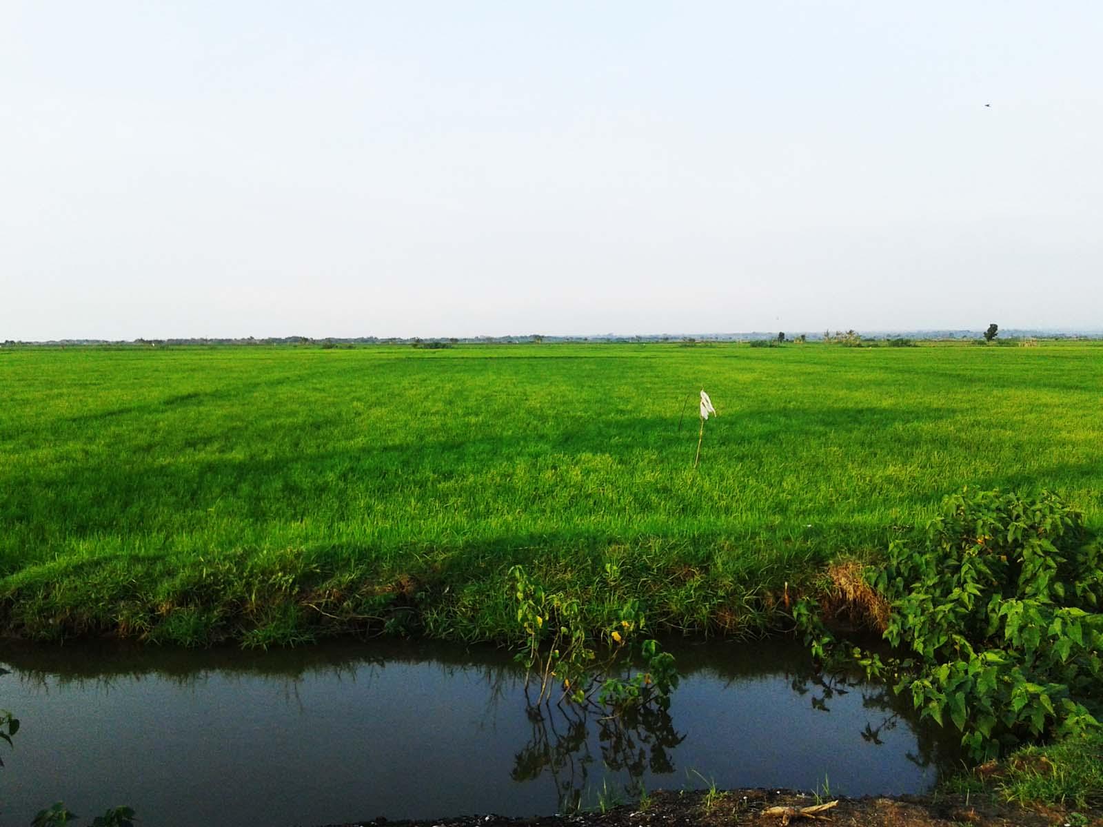Desa Karangaji Lahan Pertaniannya Masih Potensial Ditanami Padi
