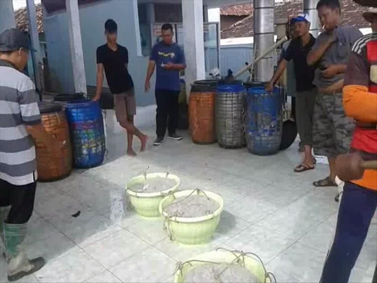 Uniknya Pelelangan Ikan Teri di TPI Desa Kedungmalang