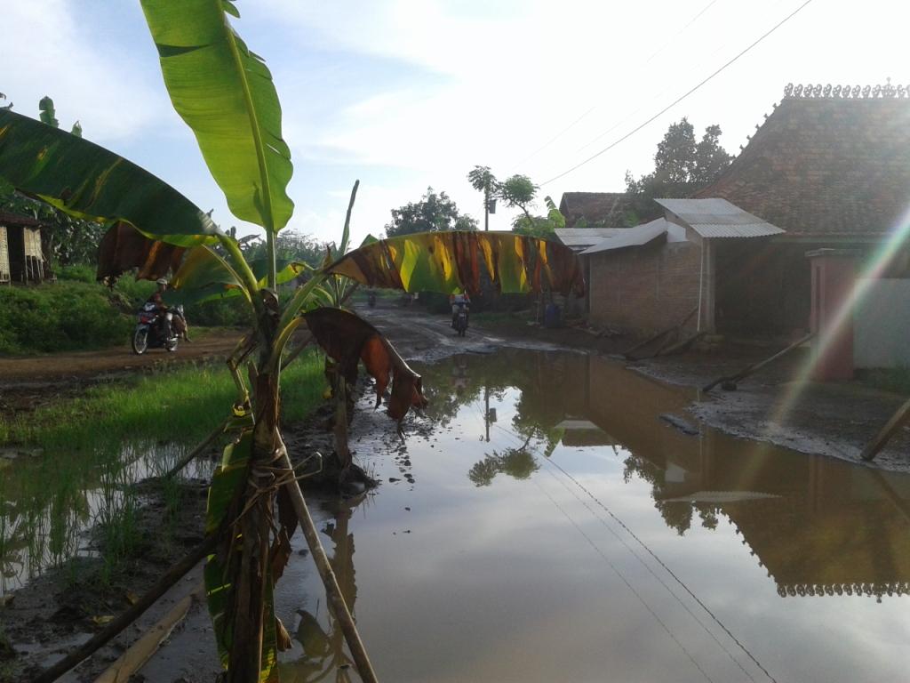 Tak Kunjung Di Perbaiki , Jalan Raya Sowan Kidul  Ditanami Pisang