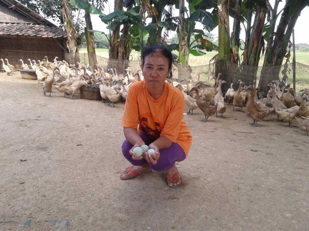 Zumrotun Peternak Itik Karangaji , Butuh Bantuan Untuk Rehap  Kandang