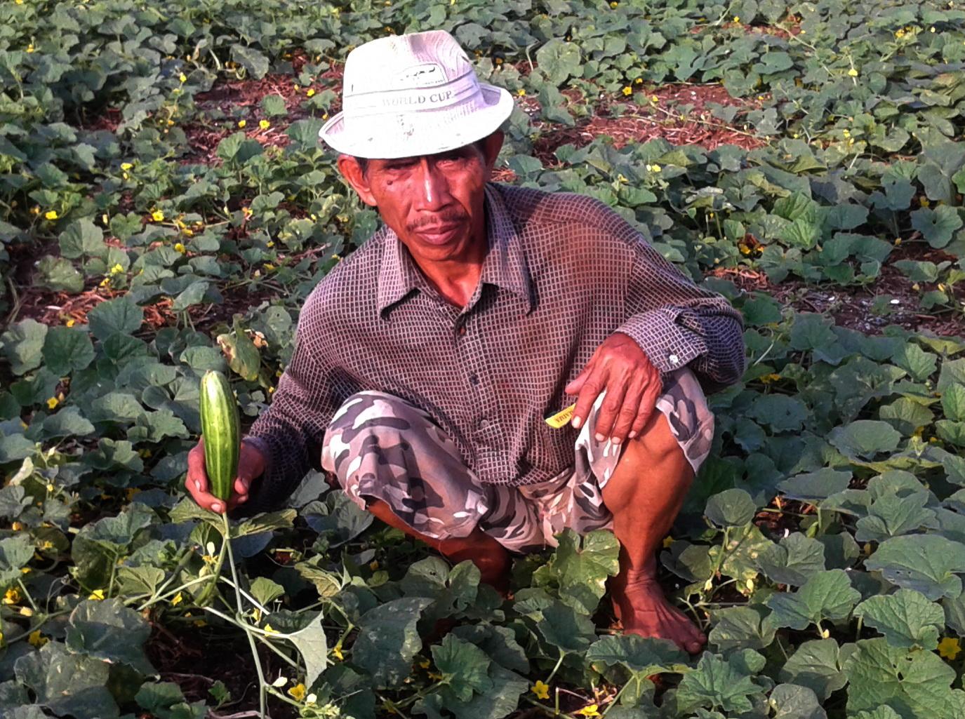 Petani Kaliombo Kemarau Manfaatkan Sawahnya Untuk Tanam Palawijo