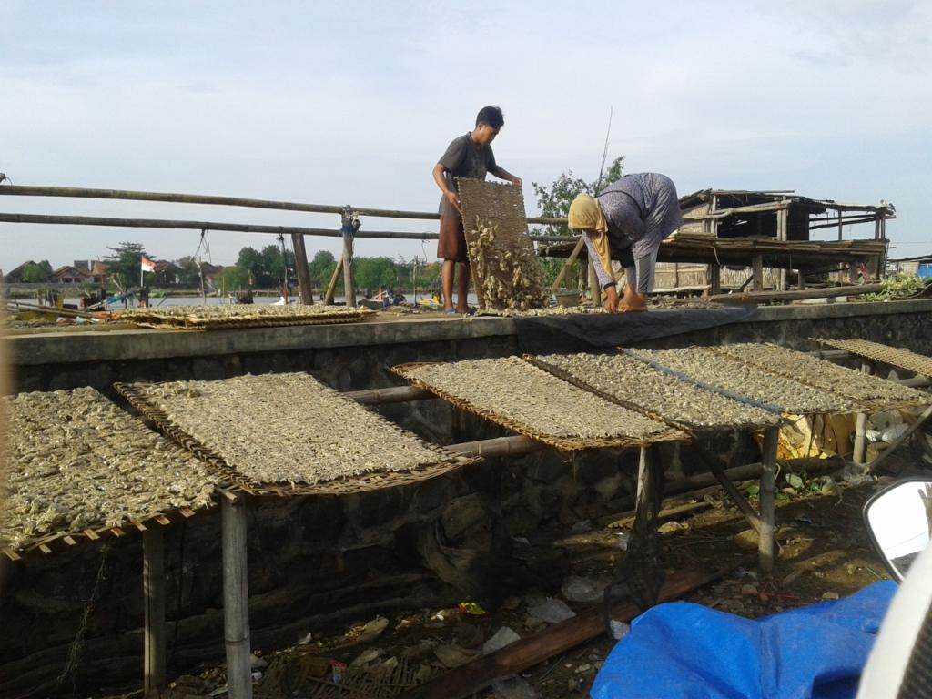 Desa Kedungmalang sentra pembuat ikan kering