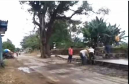Unik , Ada Pohon Asam Raksasa Ditengah Jalan Desa Kedungmalang