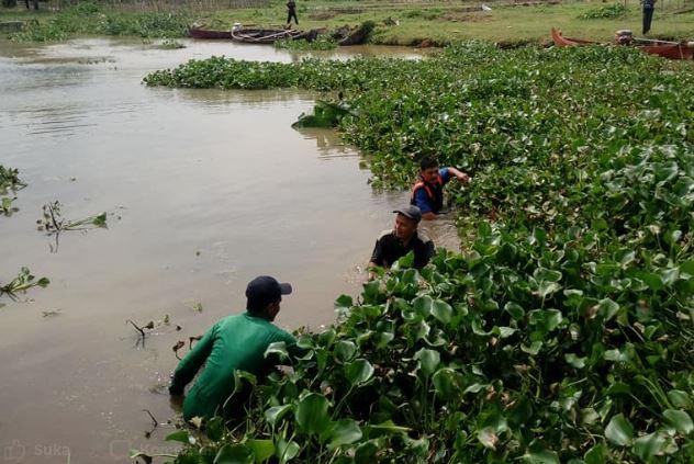 Cegah Banjir ,Pemdes Tedunan dan Karangaji Bersihkan Sungai Dari Enceng Gondok