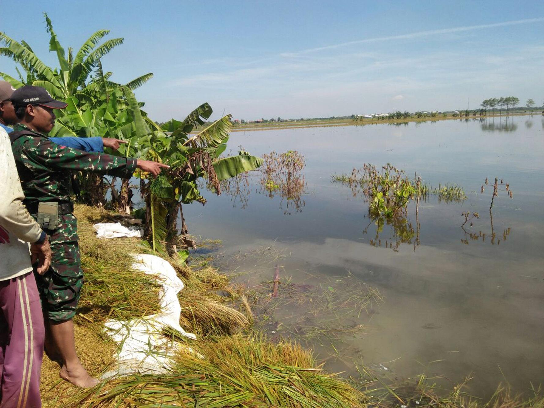 Seberangi Sungai Tak Dapat Berenang, Petani Demak Tewas  Tenggelam