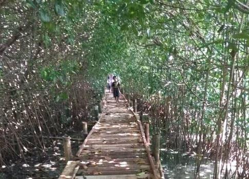 Desa Babalan Juga Punya Hutan Mangrove Yang Indah Untuk Dieksplore