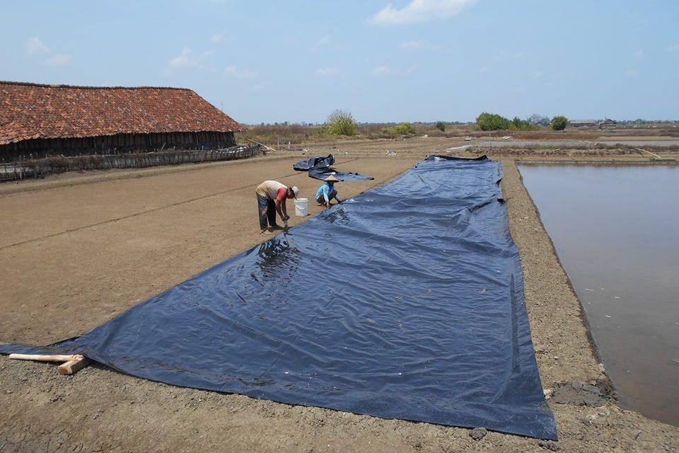 Kemarau Tiba Petambak Garam Jepara, Persiapkan Lahan Untuk Produksi