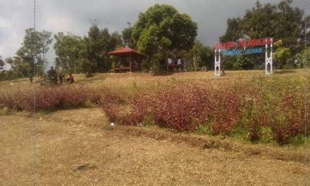 Berwisata ke Gardu Pandang Desa Kunir Jepara , Menikmati Negeri Di Atas Awan Sambil Ngopi