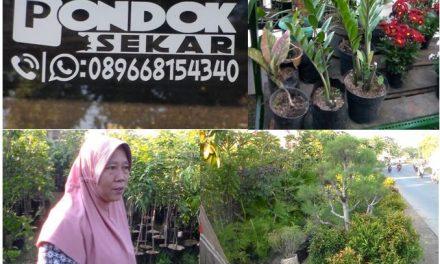 """"""" Pondok Sekar"""" Purwogondo Jepara , Sediakan Aneka Bunga dan Bibit Buah  Untuk Taman dan Kebun"""