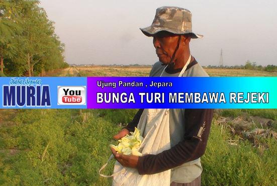 Pak Sabar petani dari Ujung Pandan Jepara  , Tanam Turi Kemaraupun Bisa Mendapatkan Uang