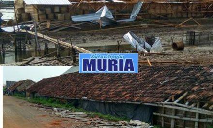 Angin Puting Beliung Terjang Kedungmalang Jepara , Puluhan   Rumah dan Gudang Garam Rusak