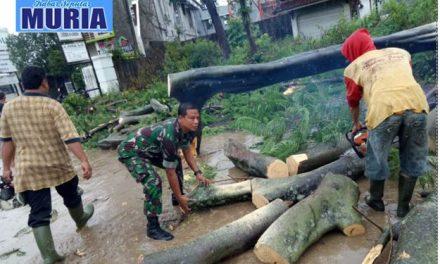 Angin Kencang Tumbangkan Pohon di Pati , Gerak Cepat Singkirkan Agar Lalu Lintas Lancar