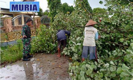 Angin Kencang Tumbangkan Pohon di Desa Mulyorejo Demak