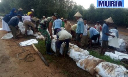 "Cegah Banjir Warga Dukuhseti Pati , Buat ""Galengan"" di Sungai Silugonggo Kenanti"