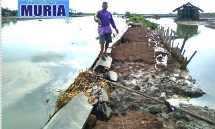 Talud  Sungai SWD I Desa Kedungmutih Demak  Rusak , Petambak Berharap Ada perbaikan