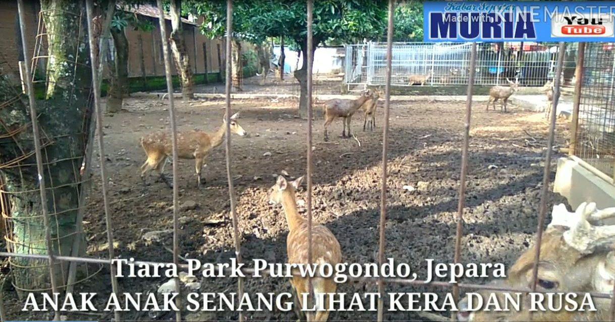 Melihat Rusa dan Kera di Water Boom Tiara Park Purwogondo Jepara