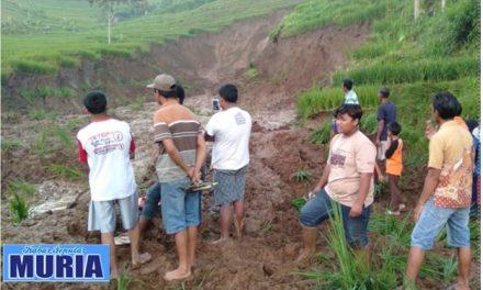 Lima Hektar Sawah di Pati Longsor Akibat Pencairan Tanah