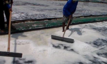 Harga Garam di Jepara Diatas Rp 50 ribu Petambak Tak  Rugi