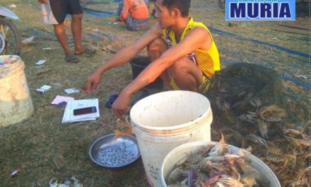 Harga Jual Rajungan di Jepara Turun , Penghasilan Nelayan Turun Drastis