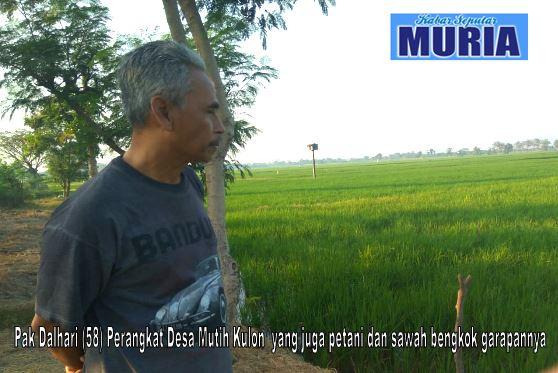 Ahmad Dalhari Perangkat Desa Mutih Kulon Demak  Yang Juga Petani
