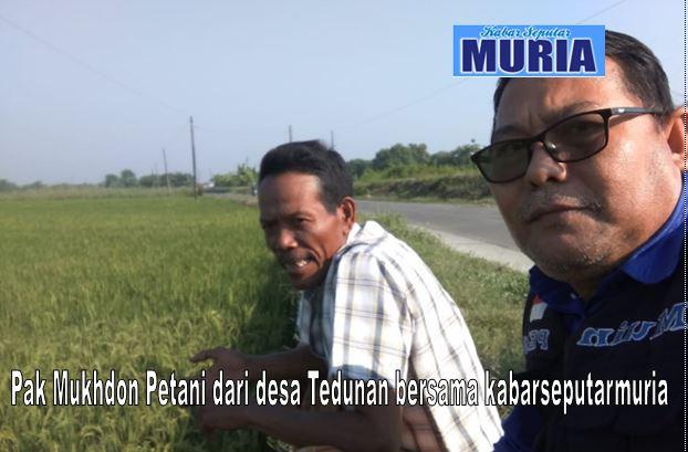 Pak Muhdhon  Warga Desa Tedunan, Tak Takut Rugi Sebagai Petani