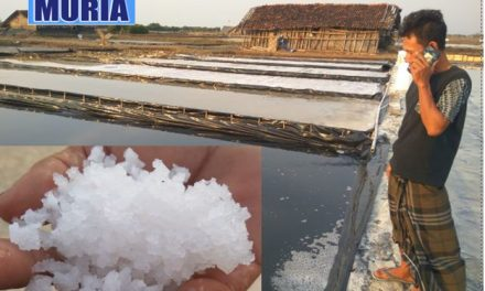 Petambak Garam Di Demak Mulai Panen Garam Kualitas Untuk Industri