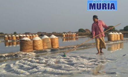 Ini 6 Daerah Penghasil Garam Terbesar, Jokowi : NTT Punya Garam Berkualitas Bagus