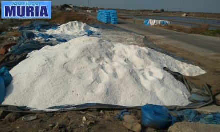 Kemarau Panjang  di Jepara , Produksi  Garam Tahun Ini  Naik 2 Kali Lipat