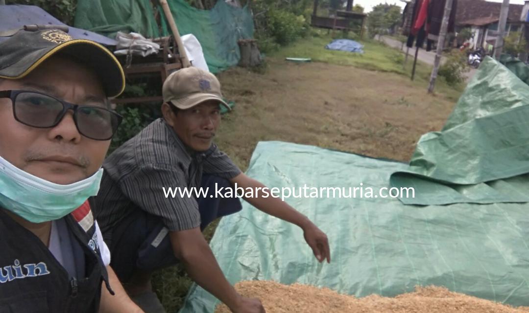 Musabihin Warga Tedunan Demak Bertani Menjaga Warisan Leluhur