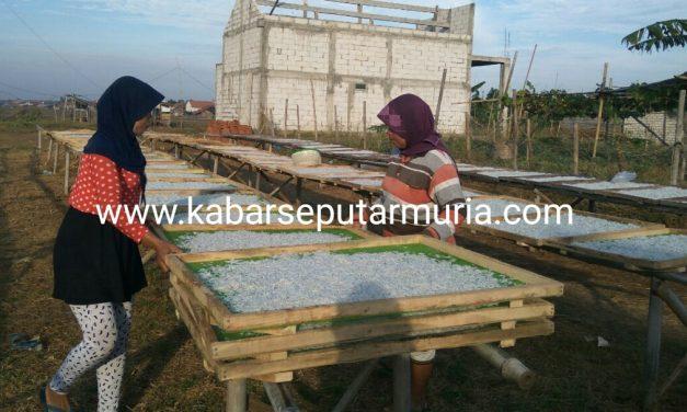 Usaha Teri Nasi Di Panggung Jepara ,Prospektif Pengusaha Butuh Cold Storage