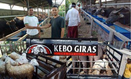 "Di Masa Pandemi Covid 19,  Penjualan Kerbau di ""Kebo Giras"" Demak , Hanya  Turun 20 Persen"