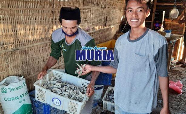 Teripang Dulu Tak Laku , Kini Di Buru Nelayan
