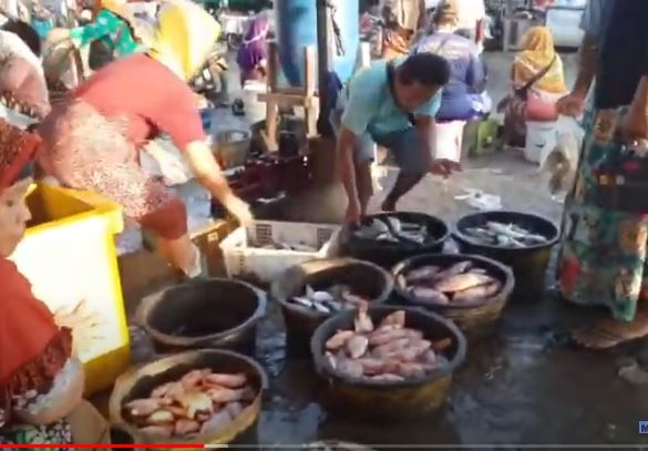 Pasar Pagi Karangaji Jepara , Ada ikan Laut ada Ikan Darat