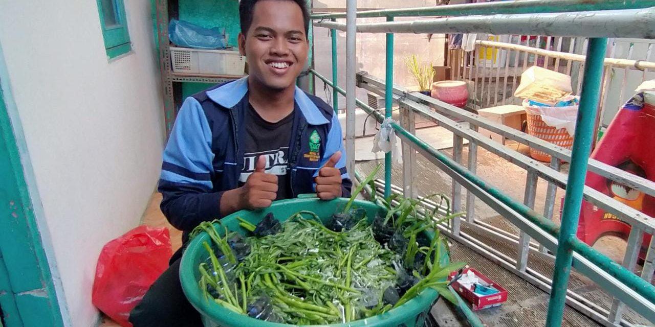 Mahasiswa KKN UIN Walisongo Lakukan Budikdamber Solusi Ternak Ikan Lele dengan Lahan Terbatas