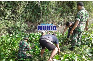 Enceng Gondok Sumbat Sungai Di Desa Mlaten Demak Dibersihkan TNI Dan Warga