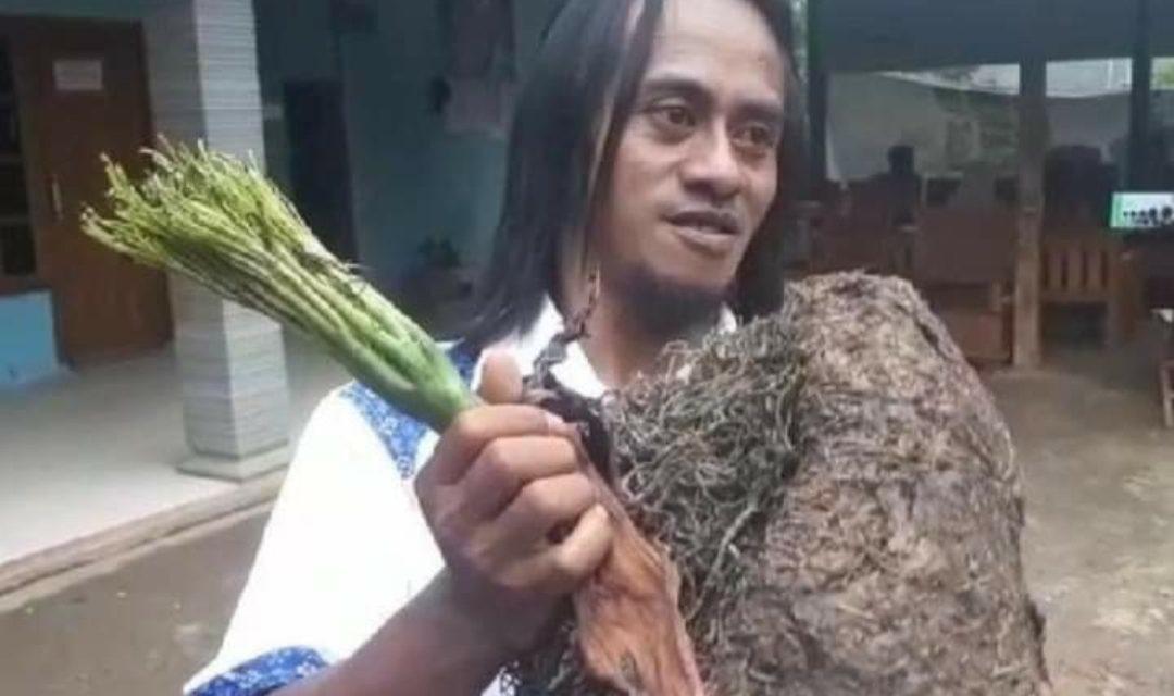Mengenal Porang Dulu Dibuang Kini Disayang , Makanan Pengganti Nasi Tinggi Gizi