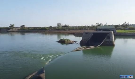 Bendung Mbungpis Gerdu Jepara Bocor bagian Sambungan  , Air Bendung Bercampur dengan air asin.