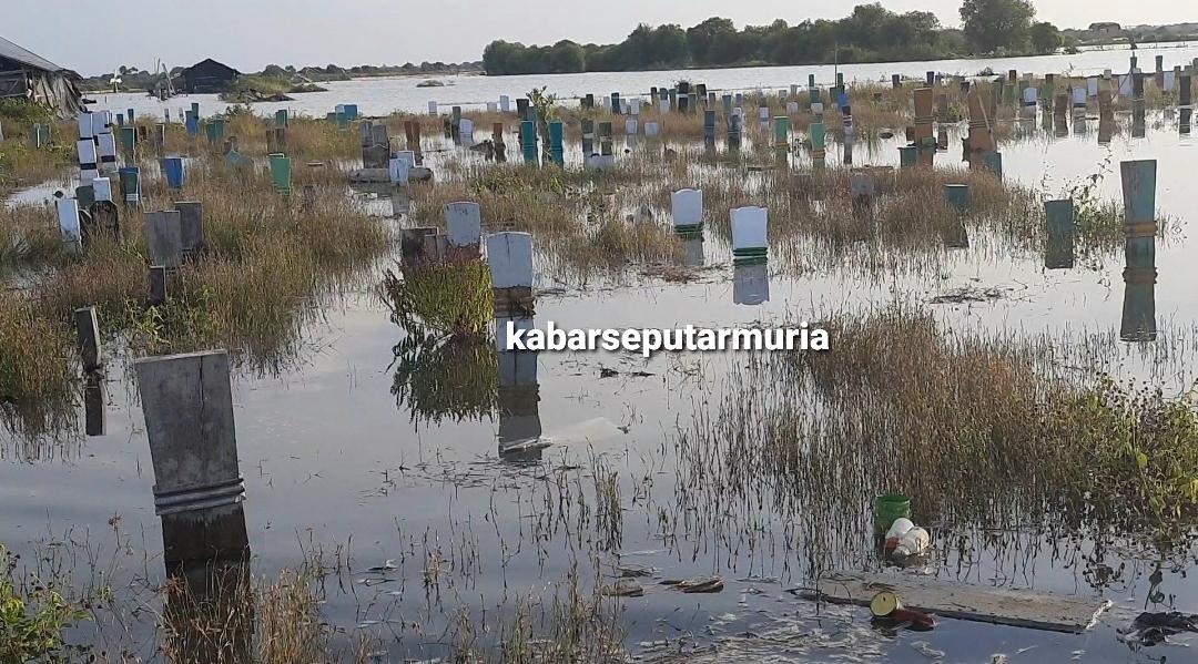 Rob Tinggi Tenggelamkan  Pemakaman Umum di Desa Pesisir Demak