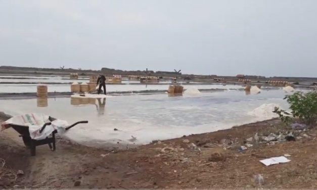 Bulan Oktober Masih Ada Hujan , Harga Garam Demak dan Jepara Beranjak Naik